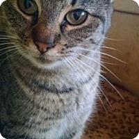 Adopt A Pet :: DeeDee - Wanaque, NJ