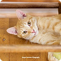 Adopt A Pet :: Archie - Knoxville, TN