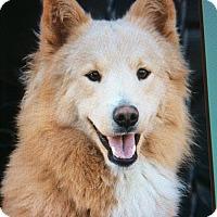 Adopt A Pet :: TEDDY VON TILLO - Los Angeles, CA