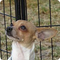 Adopt A Pet :: Twinkle - Meridian, ID