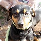 Adopt A Pet :: Crickey