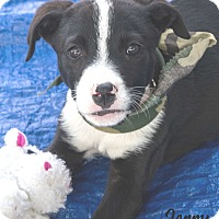 Adopt A Pet :: Jerry - Wharton, TX