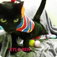 Adopt A Pet :: kilo ren - Muskegon, MI