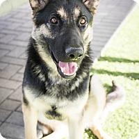 Adopt A Pet :: Mini - Phoenix, AZ