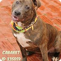 Adopt A Pet :: Cabaret - Camden, DE