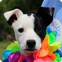 Adopt A Pet :: Olive~ meet me! - Glastonbury, CT