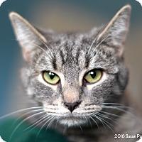 Adopt A Pet :: Winter - Bedford, VA
