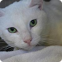 Adopt A Pet :: Sydney 33302115 - Westampton, NJ