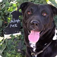Adopt A Pet :: Blackout - Salt Lake City, UT