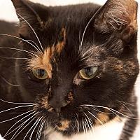 Adopt A Pet :: Amber - Chaska, MN