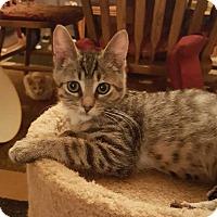 Adopt A Pet :: Raptor - South Bend, IN