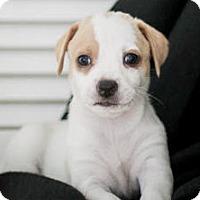 Adopt A Pet :: Cinnamon's baby Joyce - Miami, FL