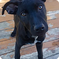 Adopt A Pet :: Raven - Dallas, TX