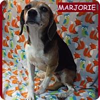 Adopt A Pet :: Marjorie - Batesville, AR