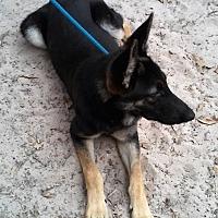 Adopt A Pet :: MILES - SAN ANTONIO, TX