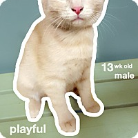 Adopt A Pet :: Avalanche - Chaska, MN