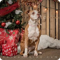 Adopt A Pet :: Canterbury - Sheboygan, WI