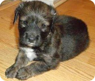 Terrier (Unknown Type, Medium) Puppy for adoption in New York, New York - Delilah