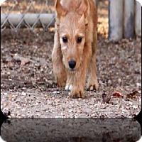 Adopt A Pet :: Melody-pending adoption - Manchester, CT