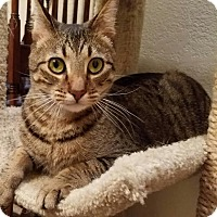 Adopt A Pet :: Scamper - Oklahoma City, OK