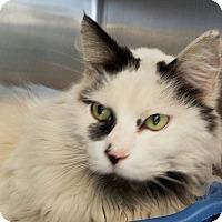 Adopt A Pet :: Sophie - Elyria, OH