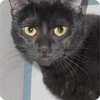 Adopt A Pet :: Tasha - Waupaca, WI