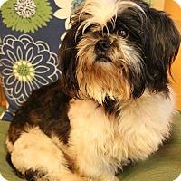 Adopt A Pet :: Zander - New Orleans, LA