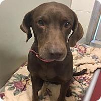 Adopt A Pet :: Matilda - Broomfield, CO