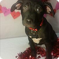 Adopt A Pet :: Cheers - Detroit, MI