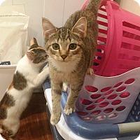 Adopt A Pet :: Hershey and Nestle - Edinburg, PA