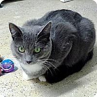 Adopt A Pet :: Gemma - Belleville, MI