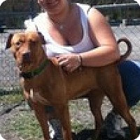 Adopt A Pet :: Chelse- Crosspost - Staatsburg, NY
