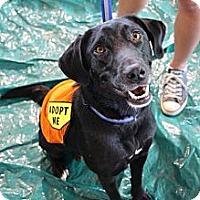 Adopt A Pet :: Sydney - Cumming, GA