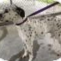 Adopt A Pet :: Rori - Tampa, FL