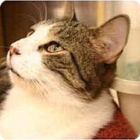 Adopt A Pet :: Albert - Jenkintown, PA