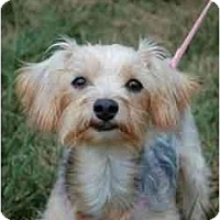 Adopt A Pet :: Maya - Columbia, SC