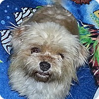Adopt A Pet :: Cricket - Bridgeton, MO