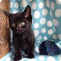 Adopt A Pet :: Rock - Union, KY