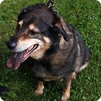 Adopt A Pet :: Max - Oberlin, OH