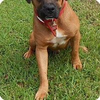 Adopt A Pet :: Oakley - Alpharetta, GA