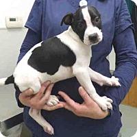 Adopt A Pet :: A565898 - Oroville, CA