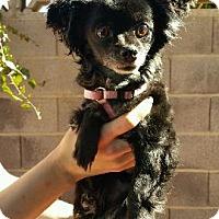 Adopt A Pet :: MEL- Adoption Pending - Hurricane, UT