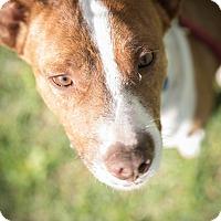 Adopt A Pet :: Frank - Daleville, AL