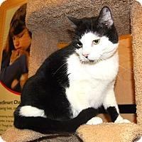 Adopt A Pet :: Phantom - Whittier, CA