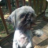 Where To Adopt A Dog In Huntsville Al