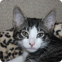 Adopt A Pet :: Forrest (LE) - Little Falls, NJ