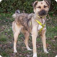 Adopt A Pet :: Alanis - Enfield, CT