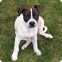 Adopt A Pet :: Cowbell - Sudbury, MA