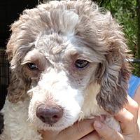 Adopt A Pet :: Lulu - Crump, TN