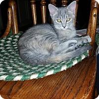Adopt A Pet :: Rosie - Lewistown, PA